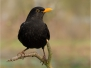 sonstige Vögel