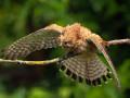 Turmfalke (Falco tinnunculus) 06